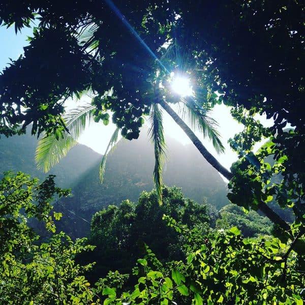 Foresta tropicale della Iao Valley a Maui