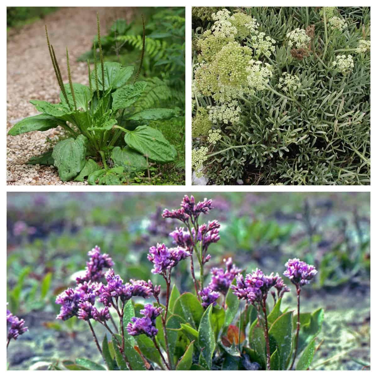 La flora della riserva