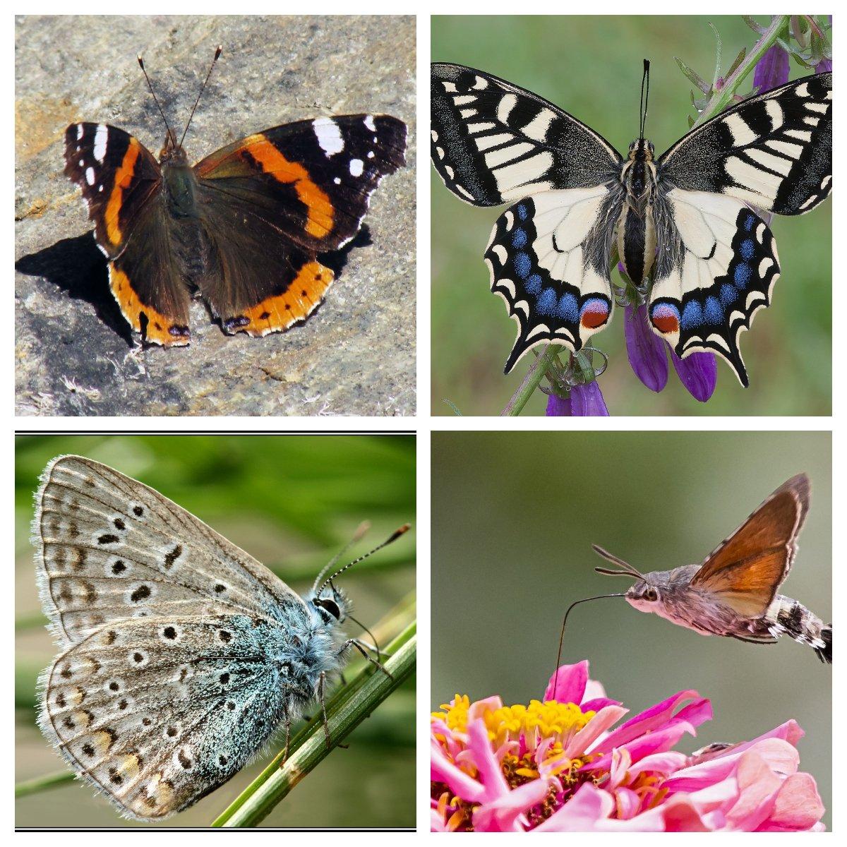 Le farfalle della riserva